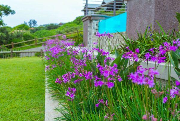 Village Gardens purple Flowers