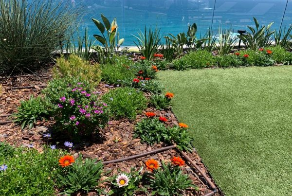 Village Garedens Landscaping Camps Bay Garden