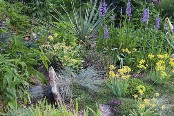 Village Gardens | Landscaping Cape Town | Services picture - drought tolerant gardens