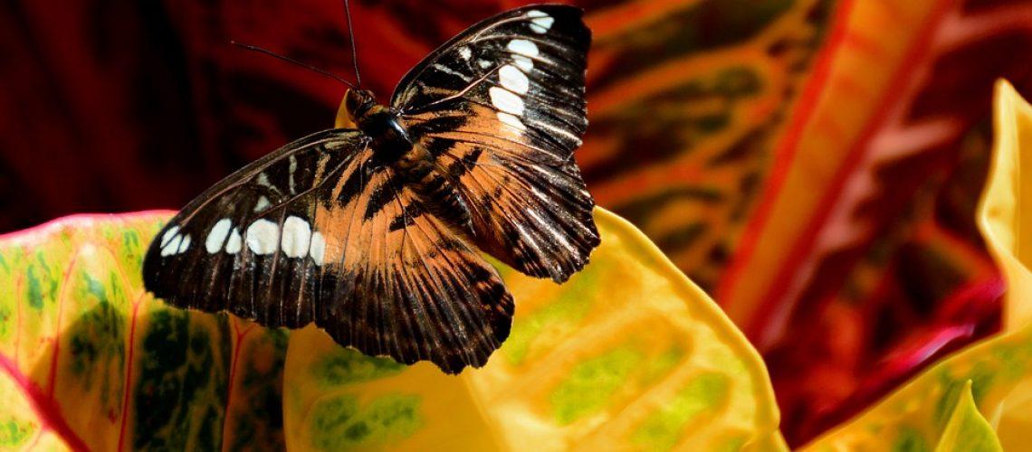 butterfly-1242813_960_720