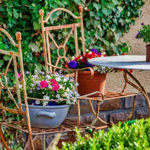 garden-4325782_960_720