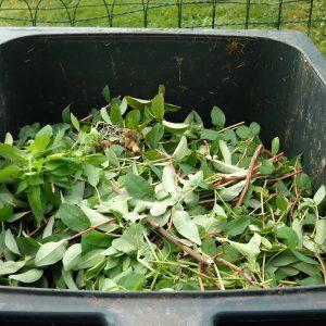 green-waste-486011_960_720