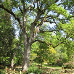 oak-tree-73462_960_720