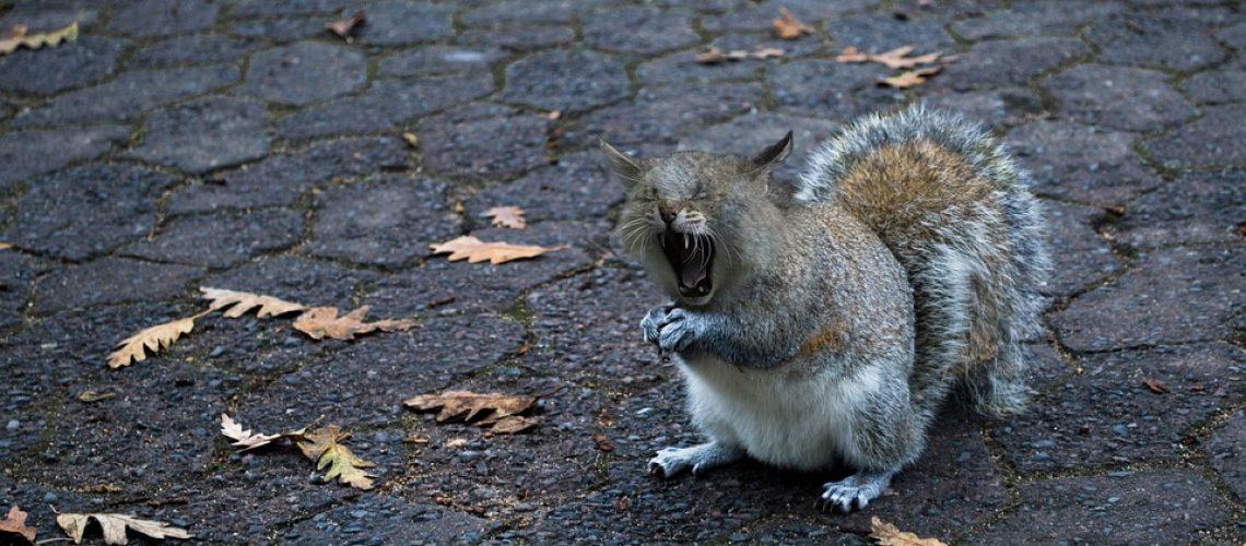 squirrel-cat-1902688_960_720